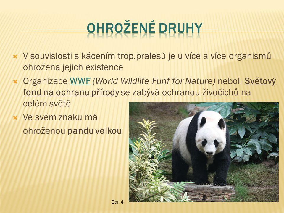 Ohrožené druhy V souvislosti s kácením trop.pralesů je u více a více organismů ohrožena jejich existence.