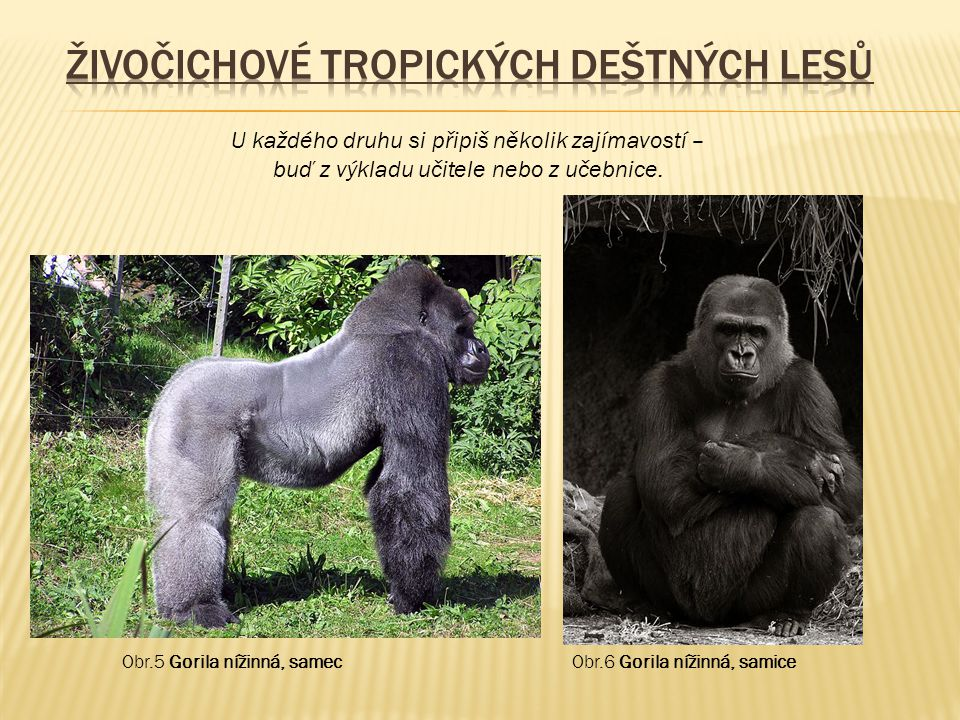 Živočichové tropických deštných lesů