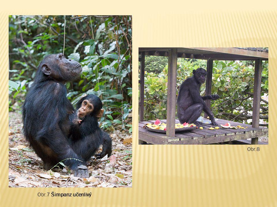 Obr.8 Obr.7 Šimpanz učenlivý