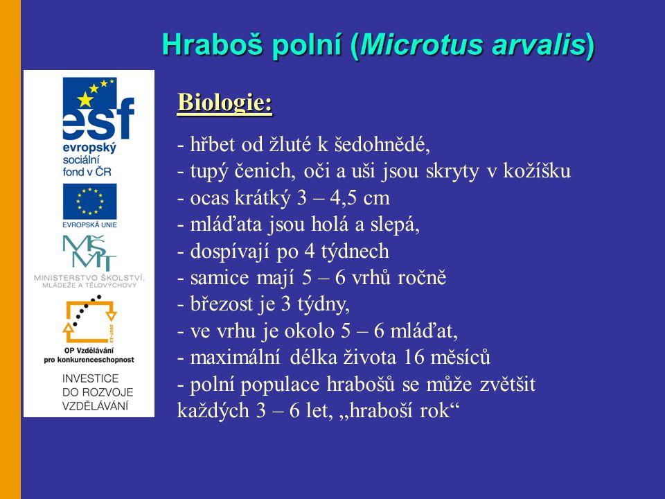 Hraboš polní (Microtus arvalis)