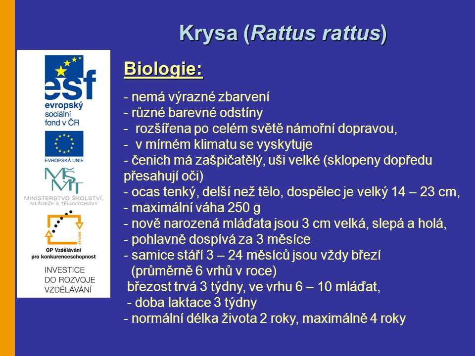 Krysa (Rattus rattus) Biologie: - nemá výrazné zbarvení
