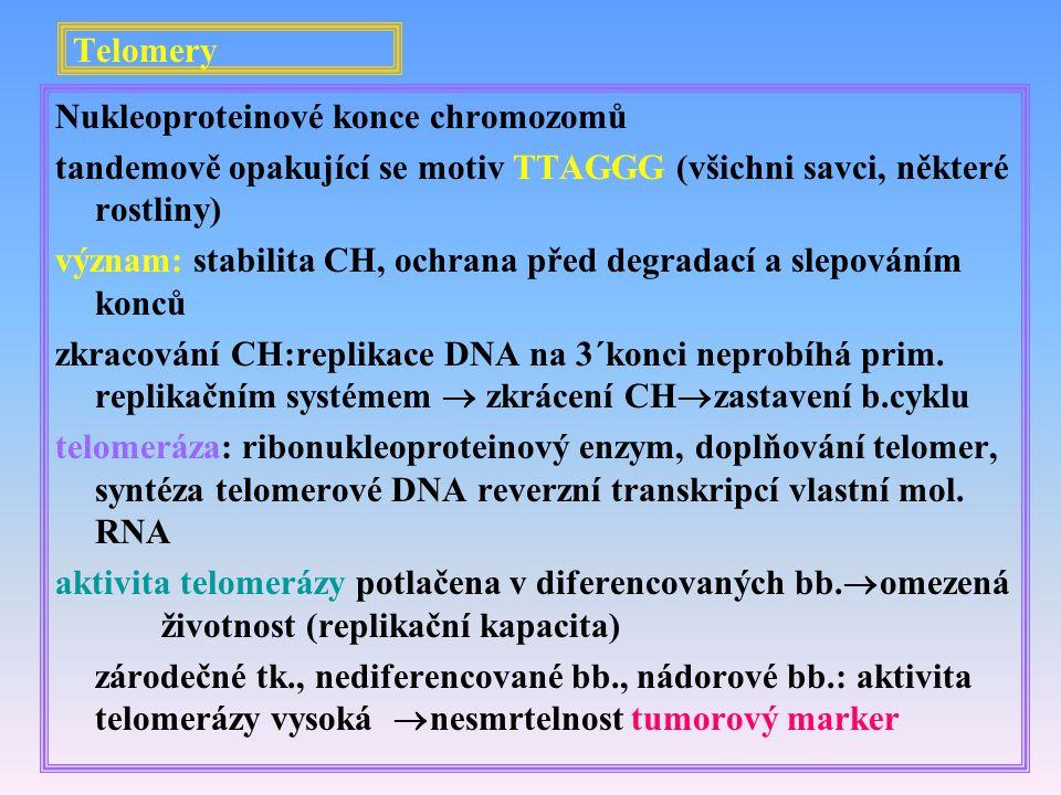 Telomery Nukleoproteinové konce chromozomů. tandemově opakující se motiv TTAGGG (všichni savci, některé rostliny)