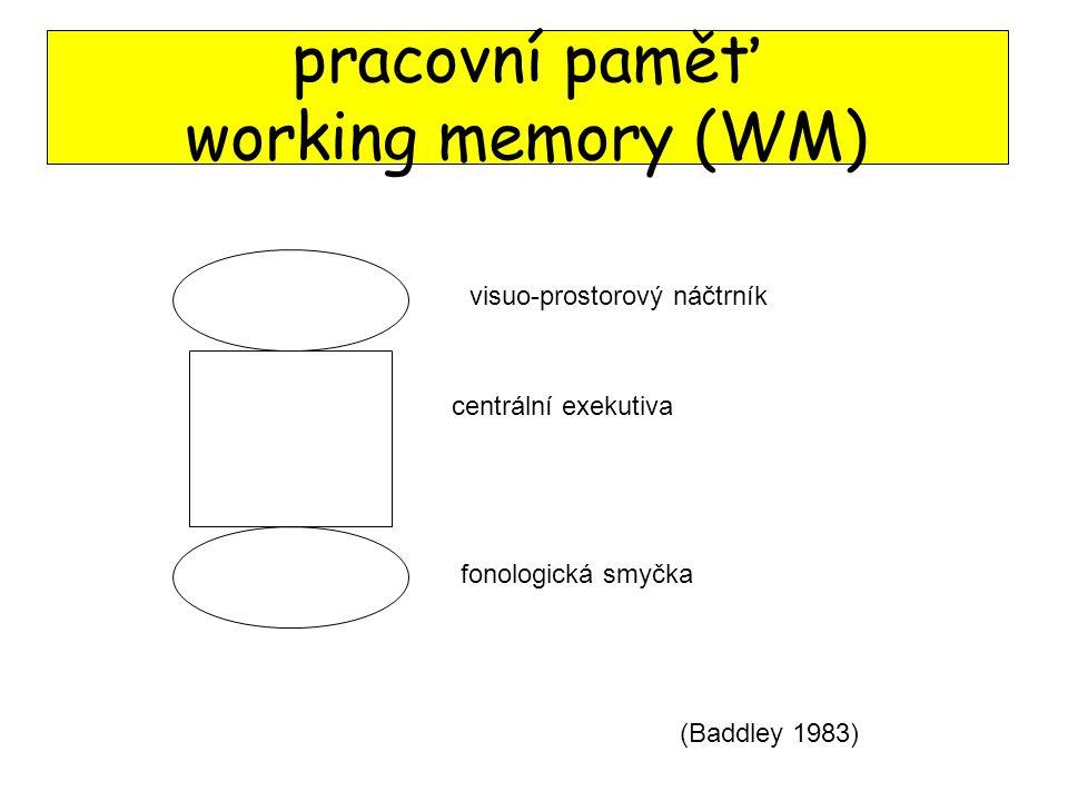 pracovní paměť working memory (WM)