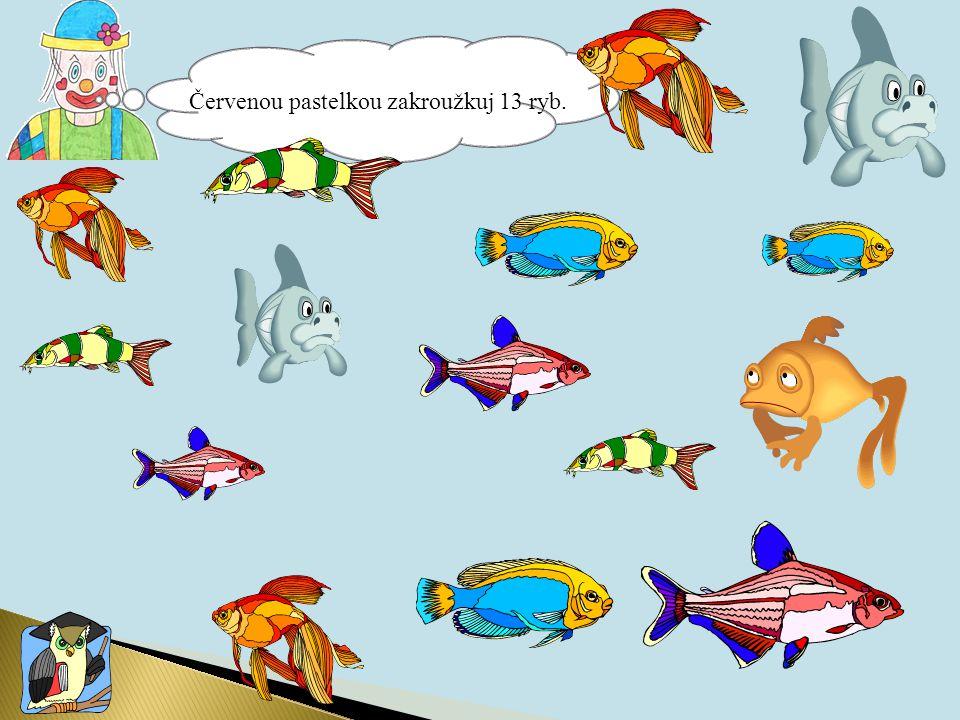 Červenou pastelkou zakroužkuj 13 ryb.