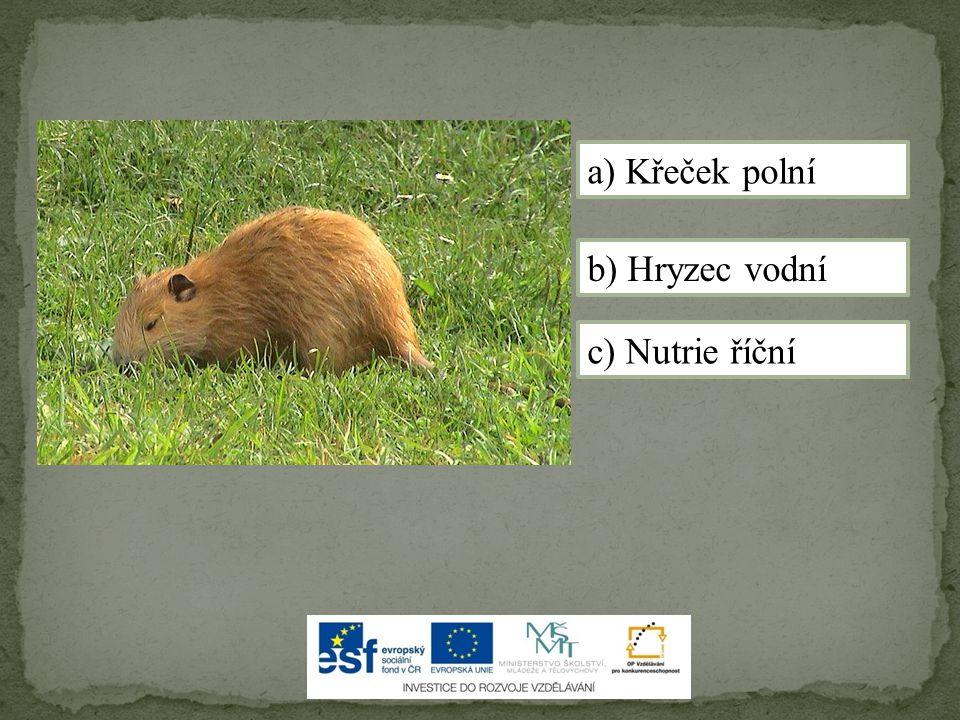 a) Křeček polní b) Hryzec vodní c) Nutrie říční