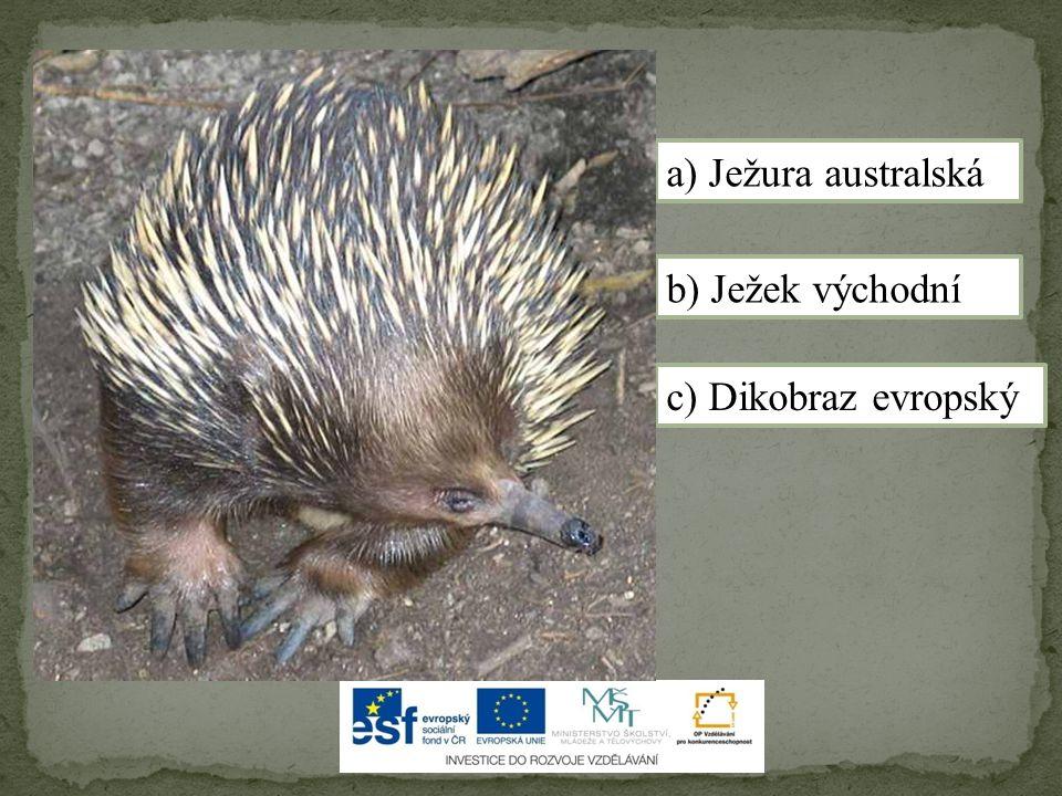 a) Ježura australská b) Ježek východní c) Dikobraz evropský