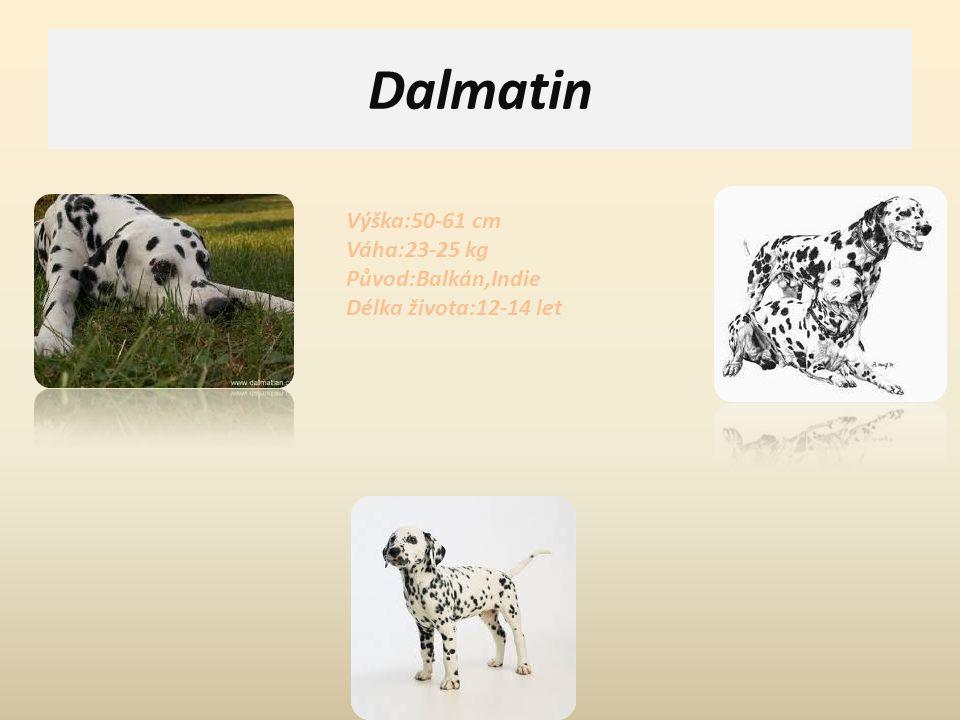 Dalmatin Výška:50-61 cm Váha:23-25 kg Původ:Balkán,Indie Délka života:12-14 let.