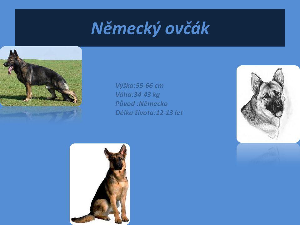 Německý ovčák Výška:55-66 cm Váha:34-43 kg Původ :Německo Délka života:12-13 let