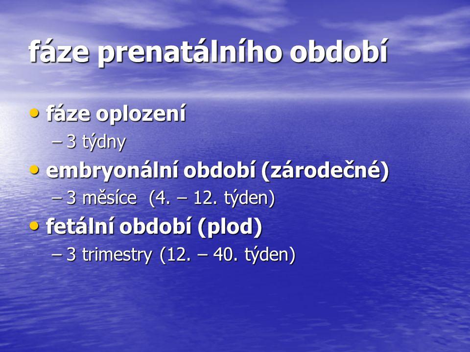 fáze prenatálního období