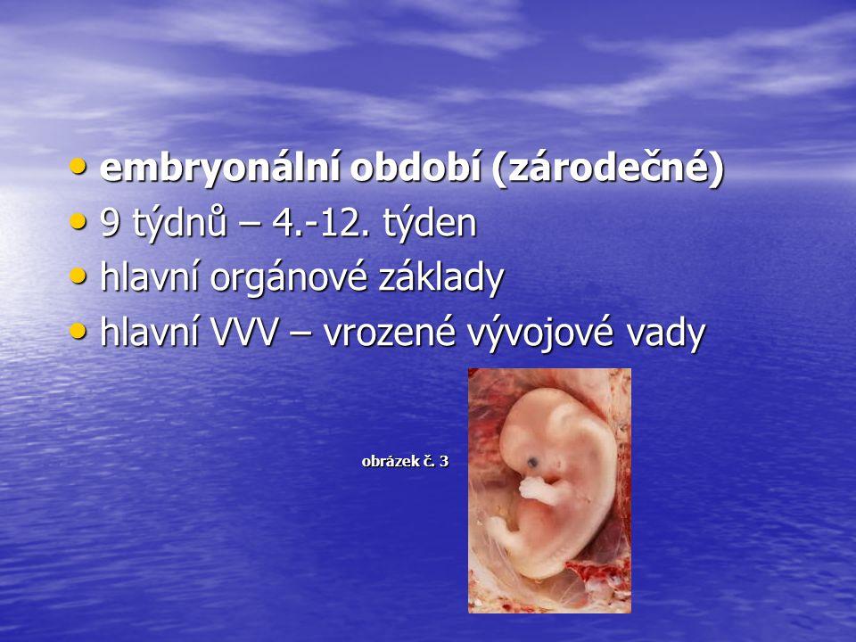 embryonální období (zárodečné) 9 týdnů – 4.-12. týden