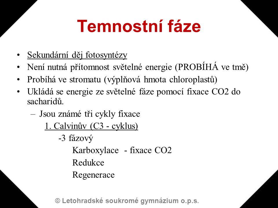Temnostní fáze Sekundární děj fotosyntézy