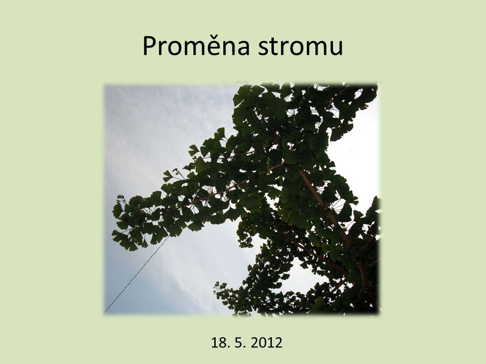 Proměna stromu 18. 5. 2012