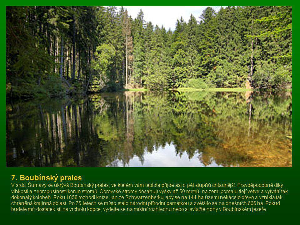 7. Boubínský prales