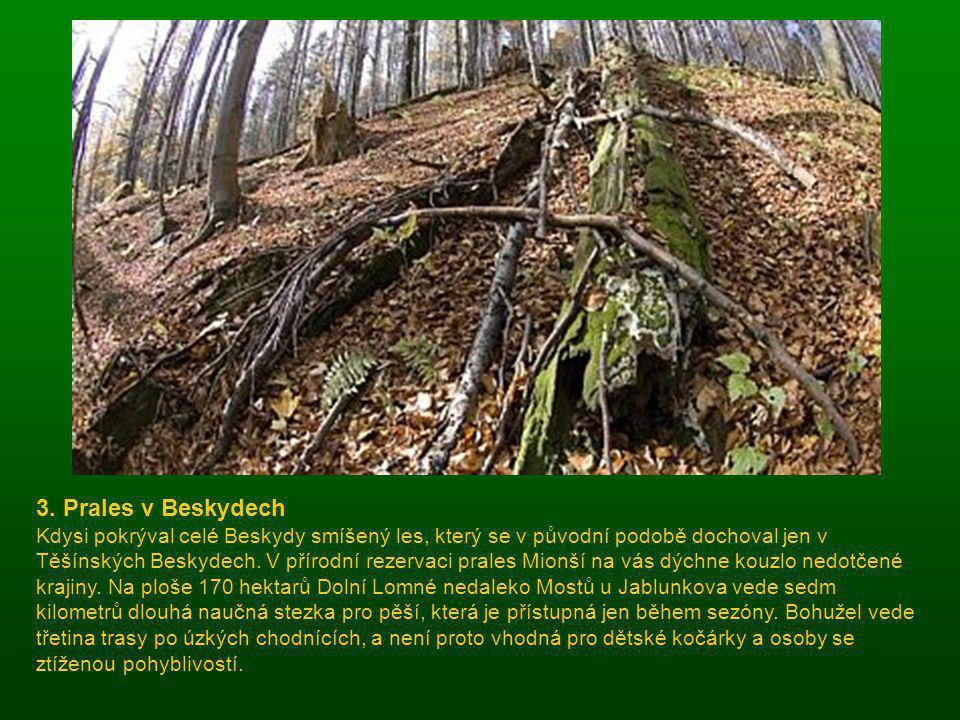 3. Prales v Beskydech