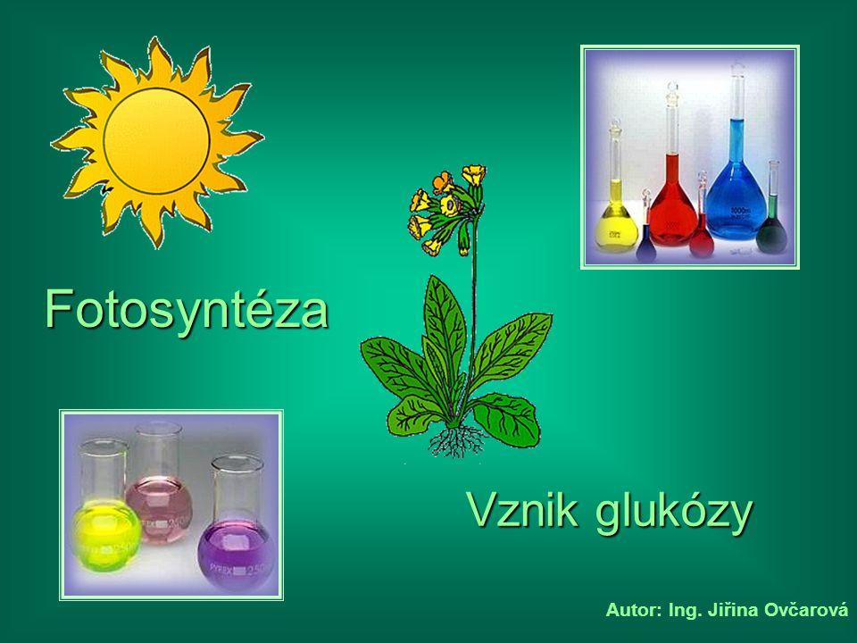 Fotosyntéza Vznik glukózy Autor: Ing. Jiřina Ovčarová
