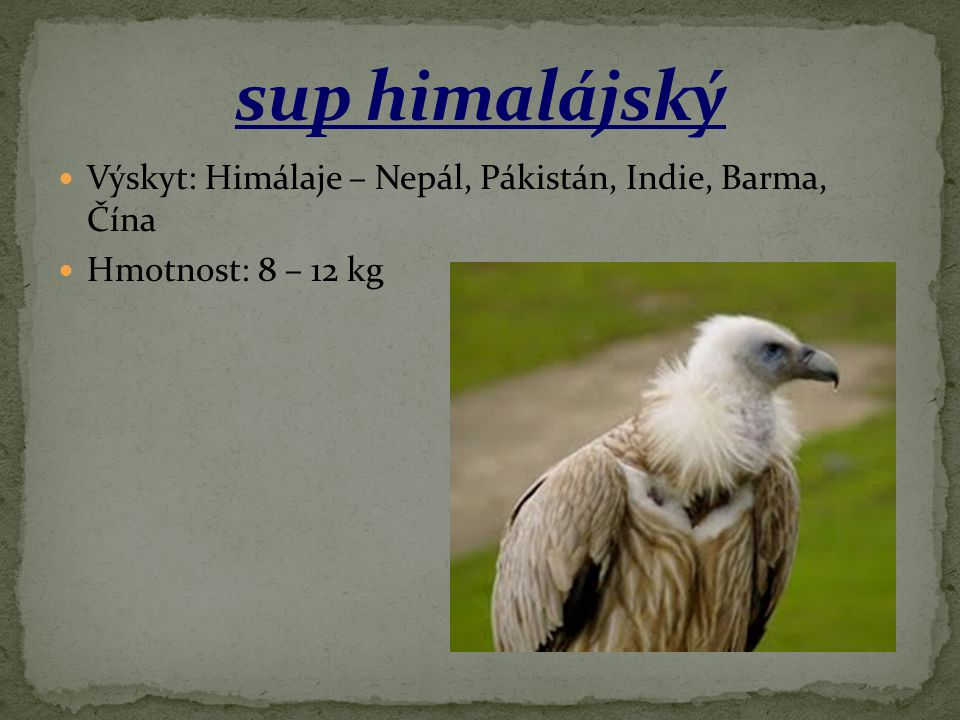 sup himalájský Výskyt: Himálaje – Nepál, Pákistán, Indie, Barma, Čína