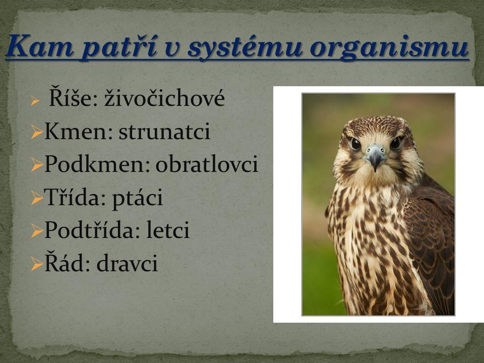 Kam patří v systému organismu