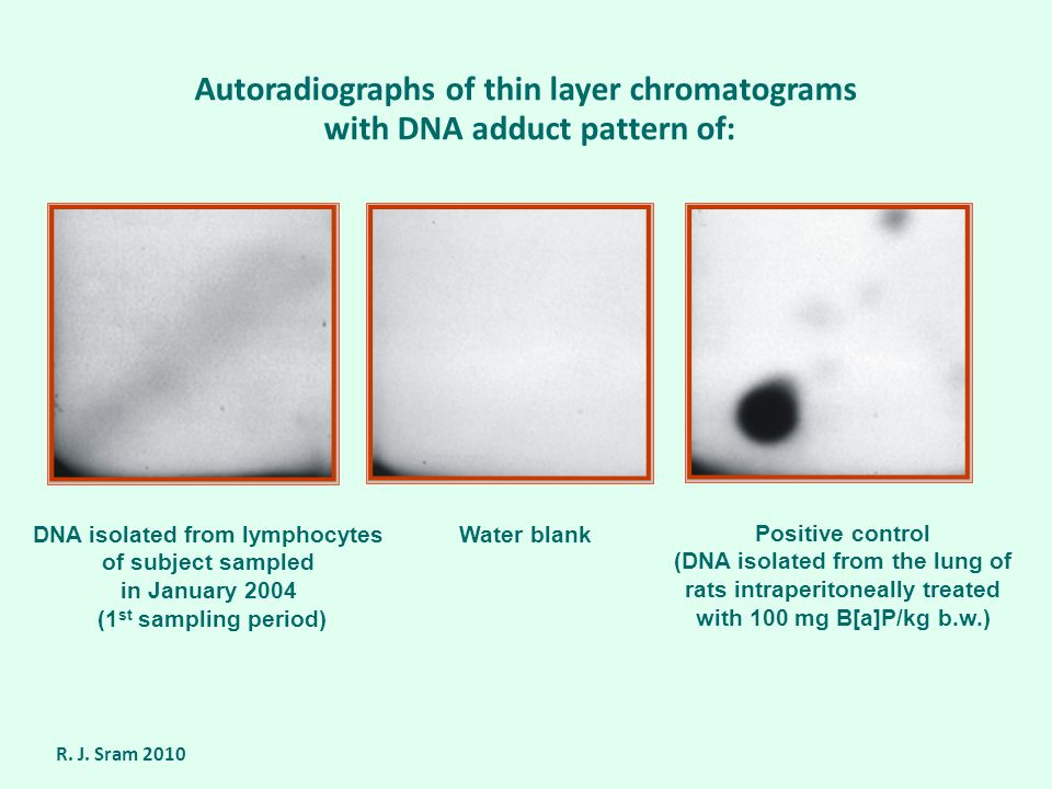 Autoradiographs of thin layer chromatograms