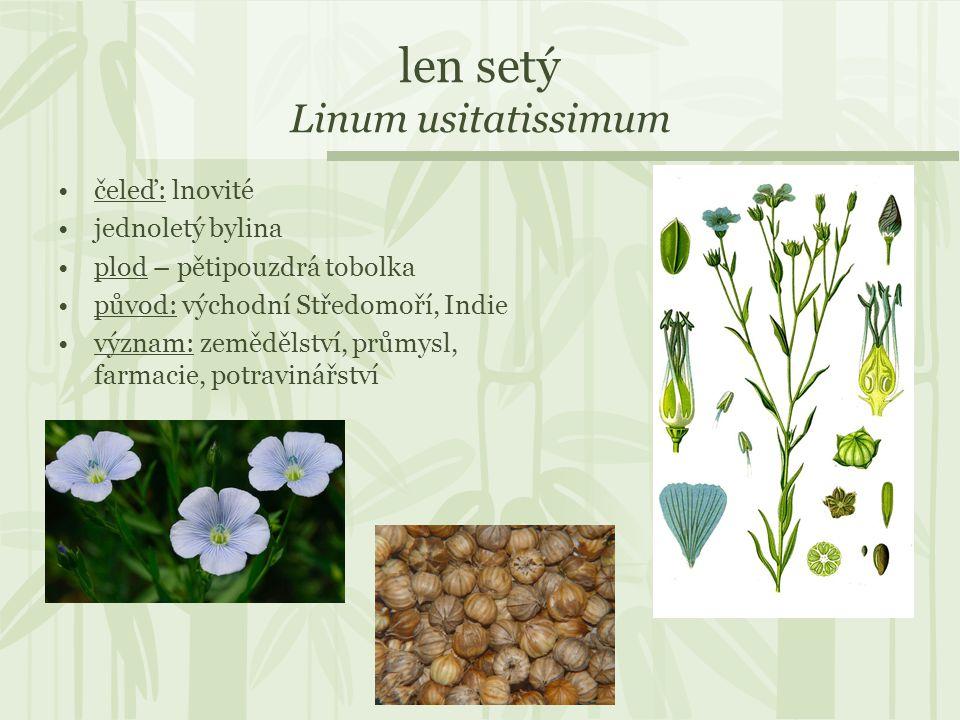 len setý Linum usitatissimum