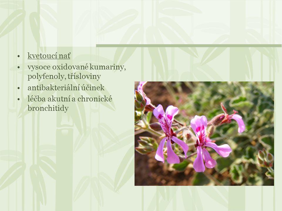 kvetoucí nať vysoce oxidované kumariny, polyfenoly, třísloviny.