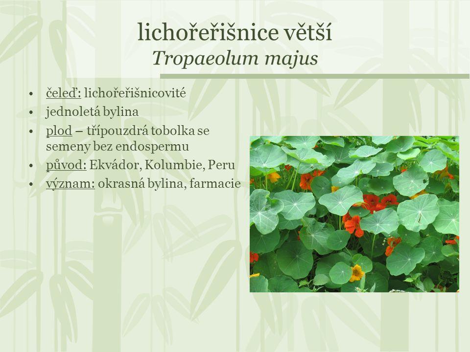 lichořeřišnice větší Tropaeolum majus