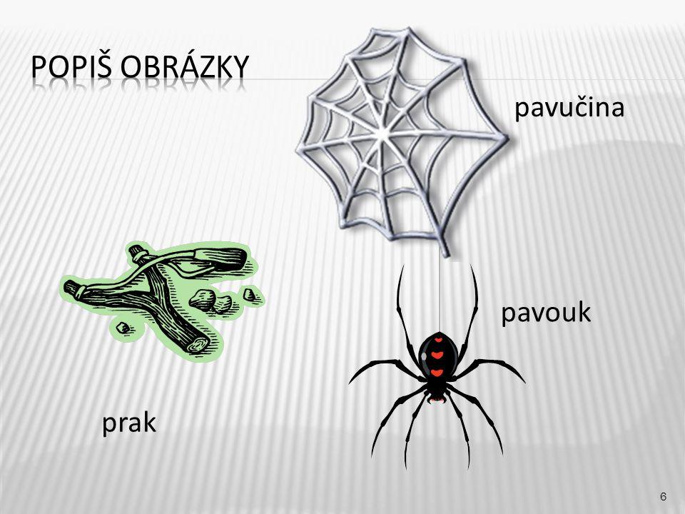 Popiš obrázky pavučina pavouk prak