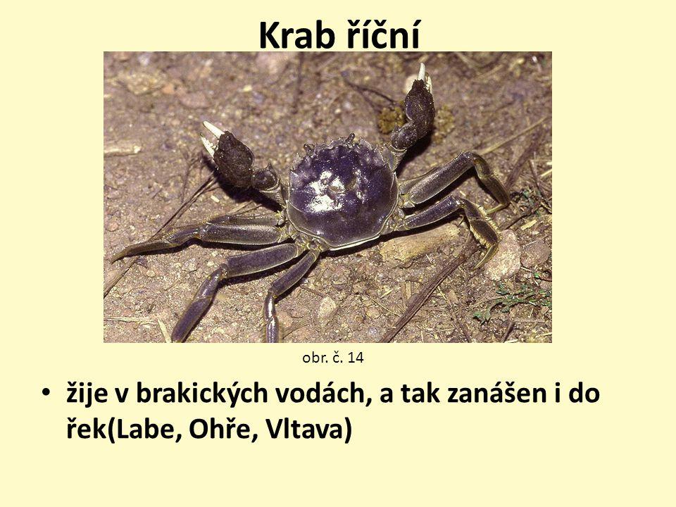 Krab říční obr. č. 14 žije v brakických vodách, a tak zanášen i do řek(Labe, Ohře, Vltava)