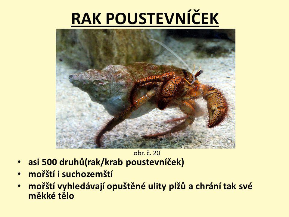 RAK POUSTEVNÍČEK asi 500 druhů(rak/krab poustevníček)