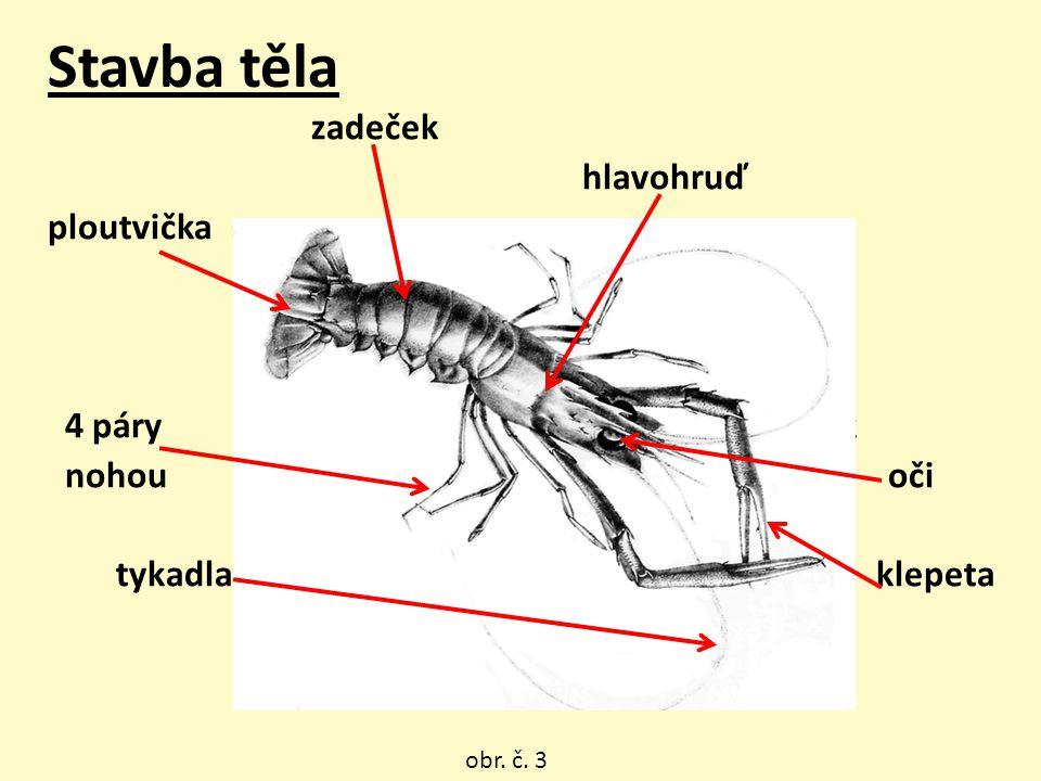 Stavba těla zadeček hlavohruď ploutvička 4 páry tyk nohou oči tykadla klepeta obr. č. 3