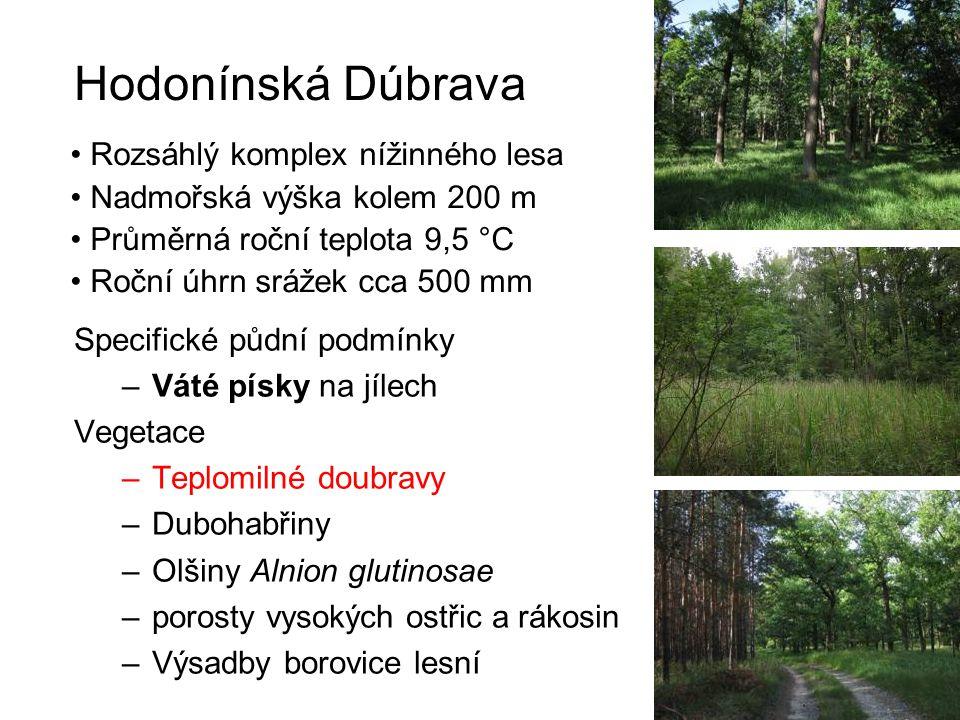 Hodonínská Dúbrava Rozsáhlý komplex nížinného lesa