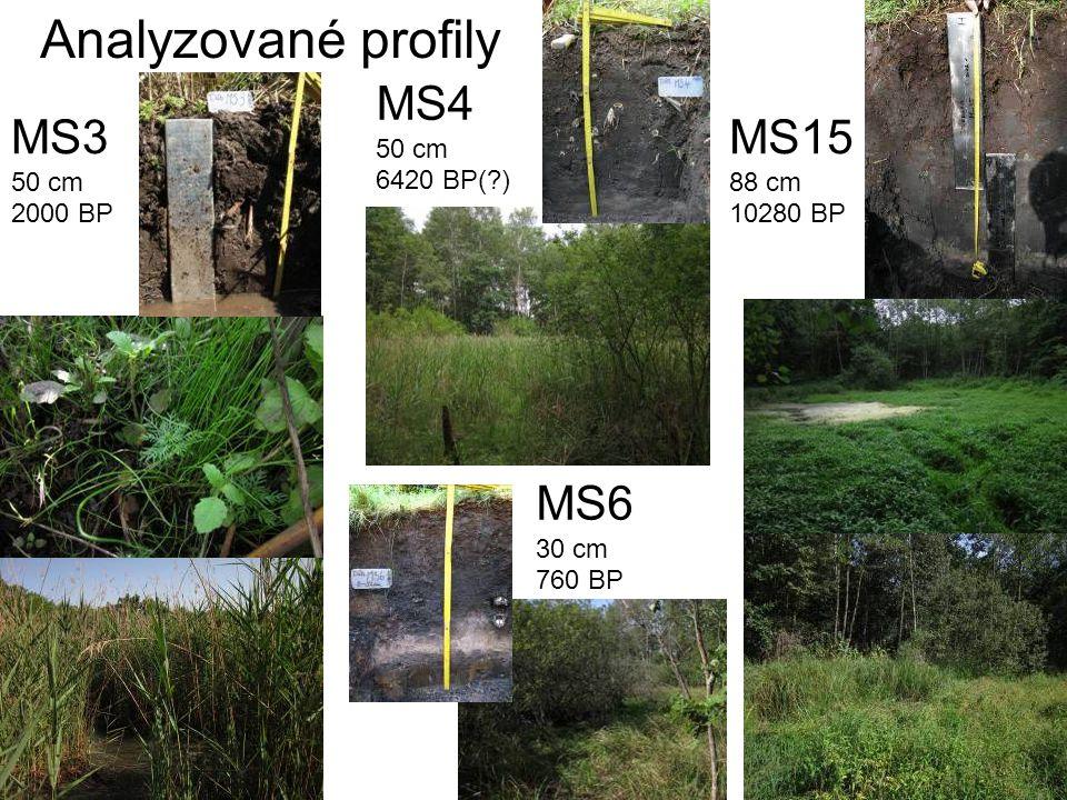 Analyzované profily MS4 50 cm 6420 BP( ) MS3 50 cm 2000 BP