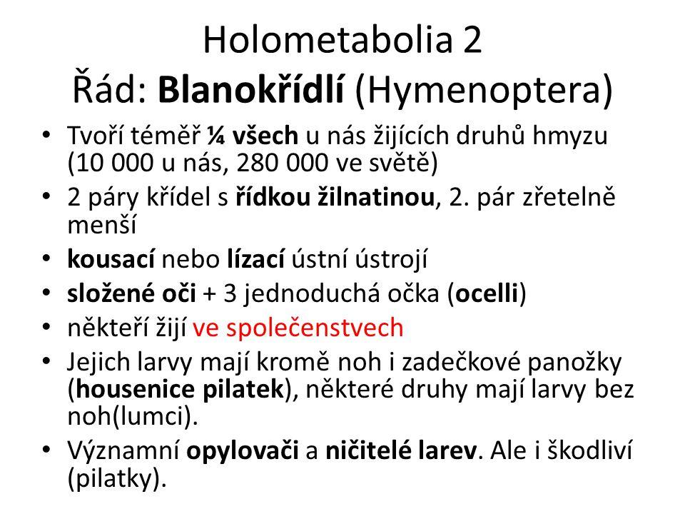Holometabolia 2 Řád: Blanokřídlí (Hymenoptera)
