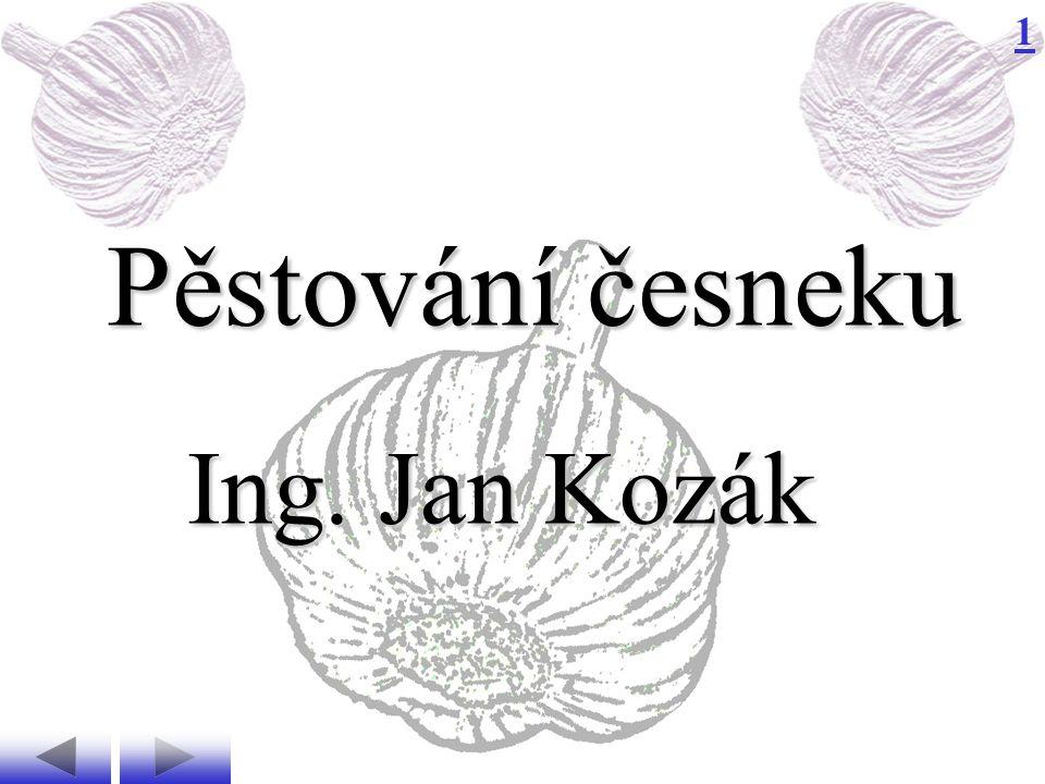 Pěstování česneku Ing. Jan Kozák