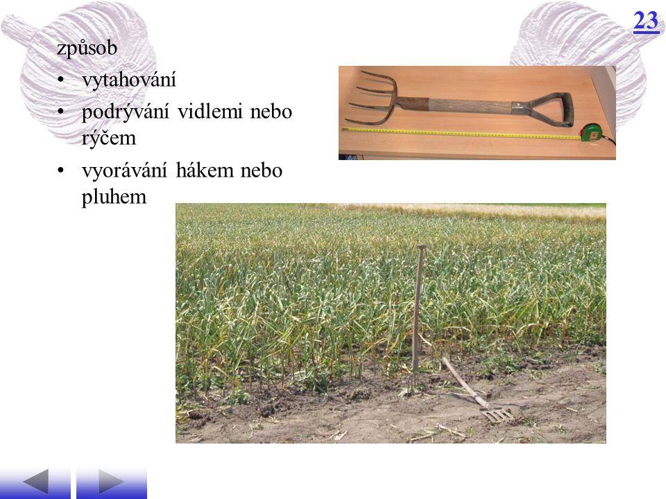 způsob vytahování podrývání vidlemi nebo rýčem vyorávání hákem nebo pluhem