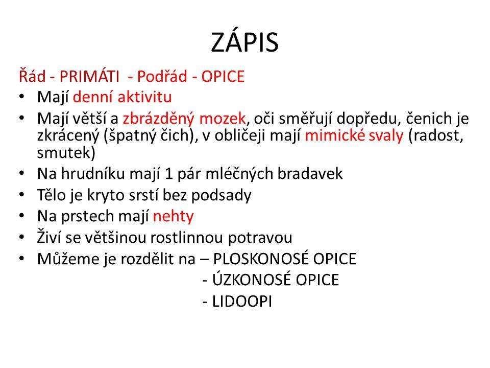ZÁPIS Řád - PRIMÁTI - Podřád - OPICE Mají denní aktivitu