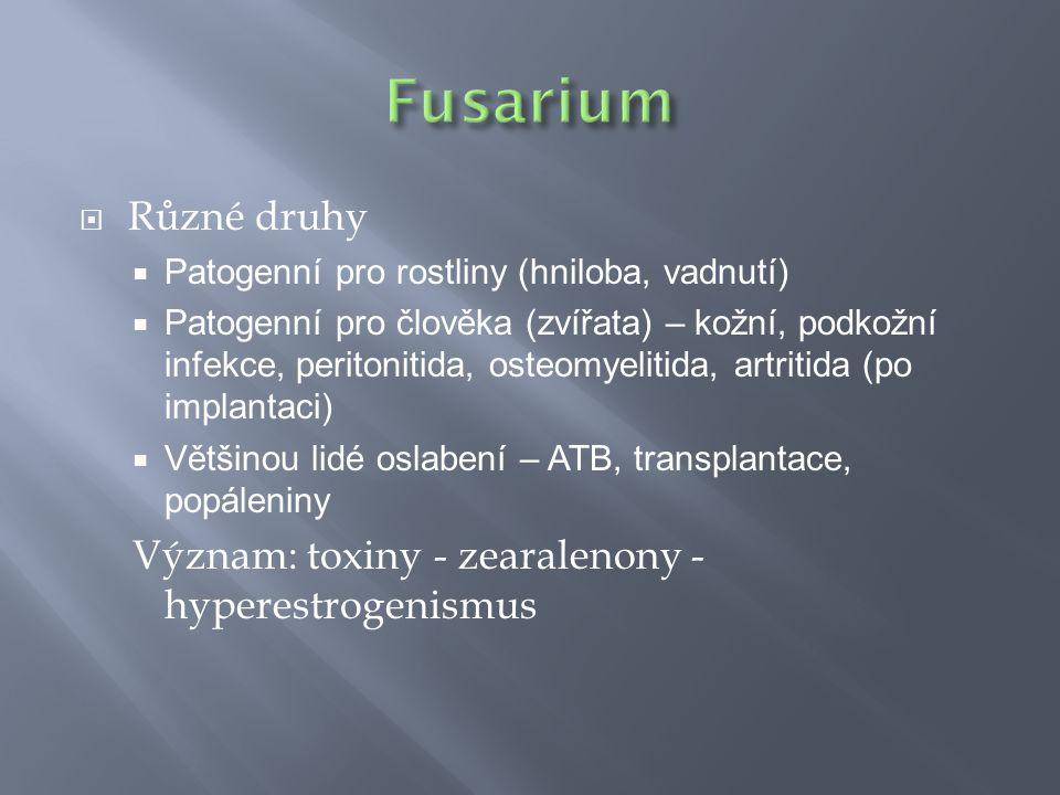 Fusarium Různé druhy Význam: toxiny - zearalenony - hyperestrogenismus