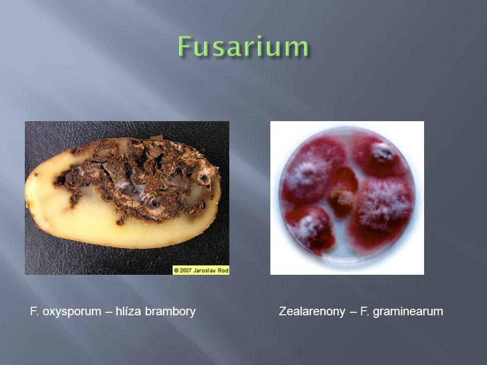 Fusarium F. oxysporum – hlíza brambory Zealarenony – F. graminearum