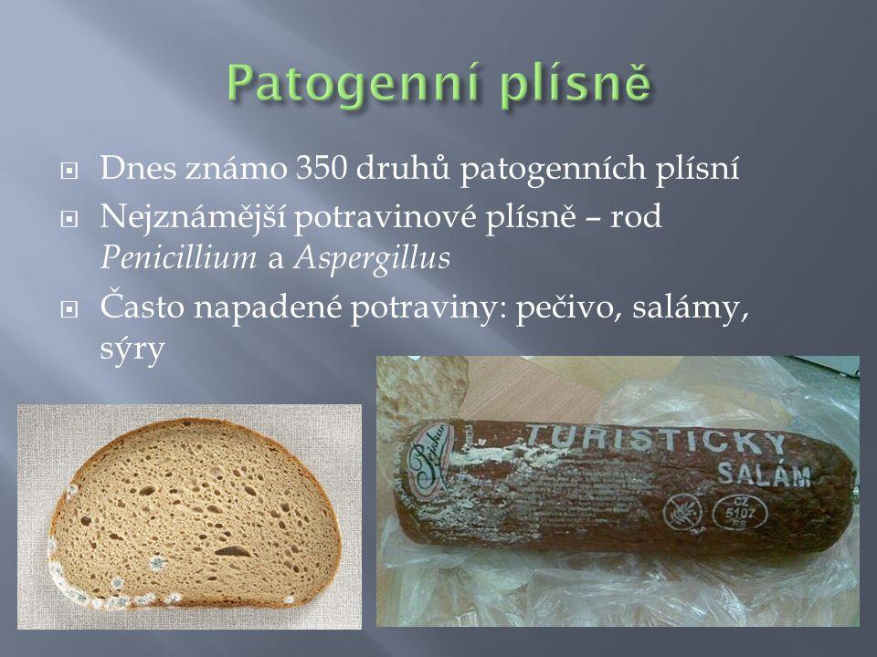Patogenní plísně Dnes známo 350 druhů patogenních plísní