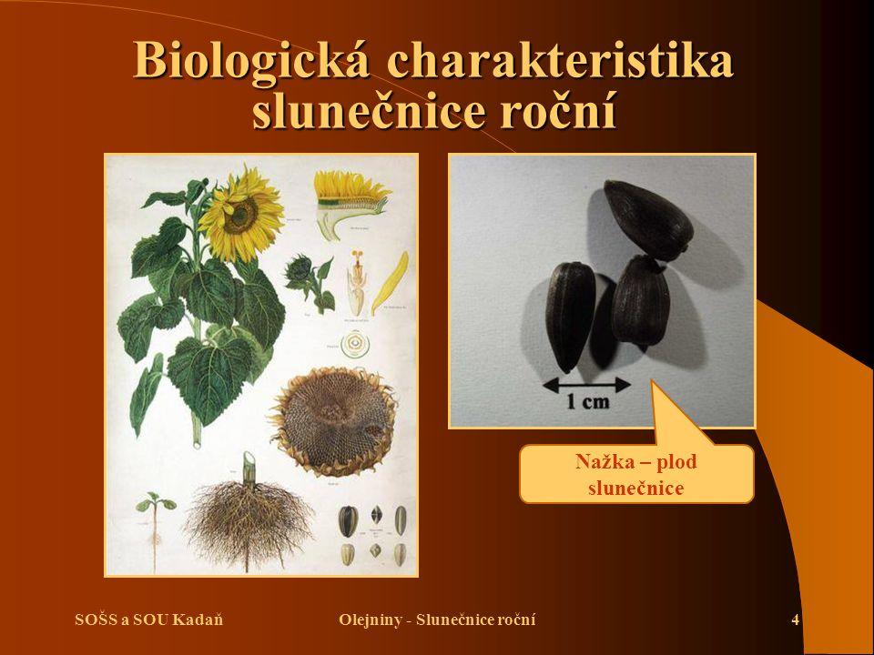 Biologická charakteristika slunečnice roční