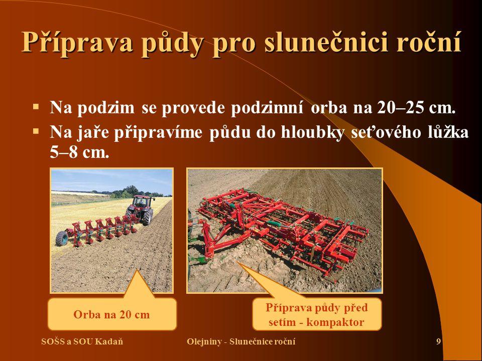 Příprava půdy pro slunečnici roční