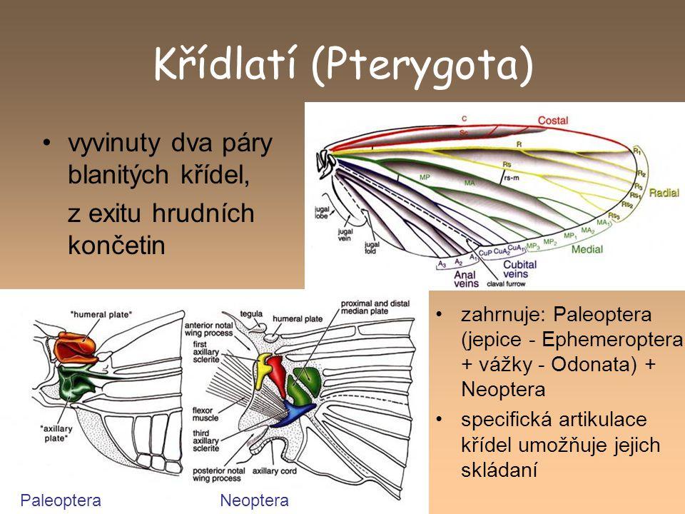 Křídlatí (Pterygota) vyvinuty dva páry blanitých křídel,