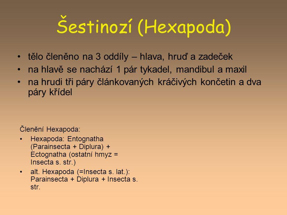 Šestinozí (Hexapoda) tělo členěno na 3 oddíly – hlava, hruď a zadeček