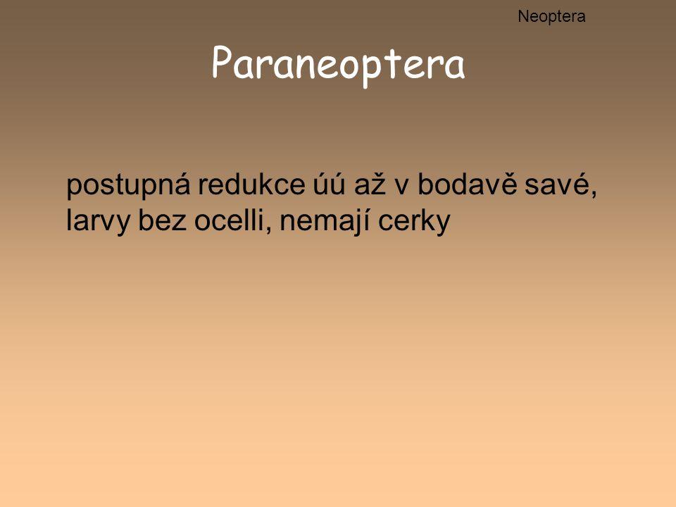 Neoptera Paraneoptera postupná redukce úú až v bodavě savé, larvy bez ocelli, nemají cerky