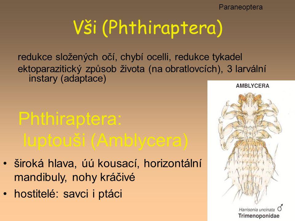 Phthiraptera: luptouši (Amblycera)