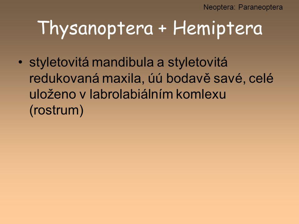 Thysanoptera + Hemiptera