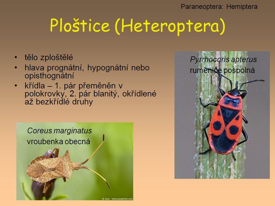Ploštice (Heteroptera)