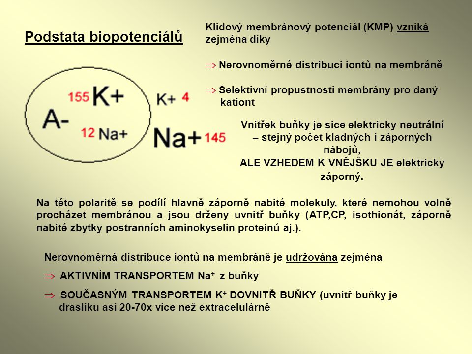Podstata biopotenciálů