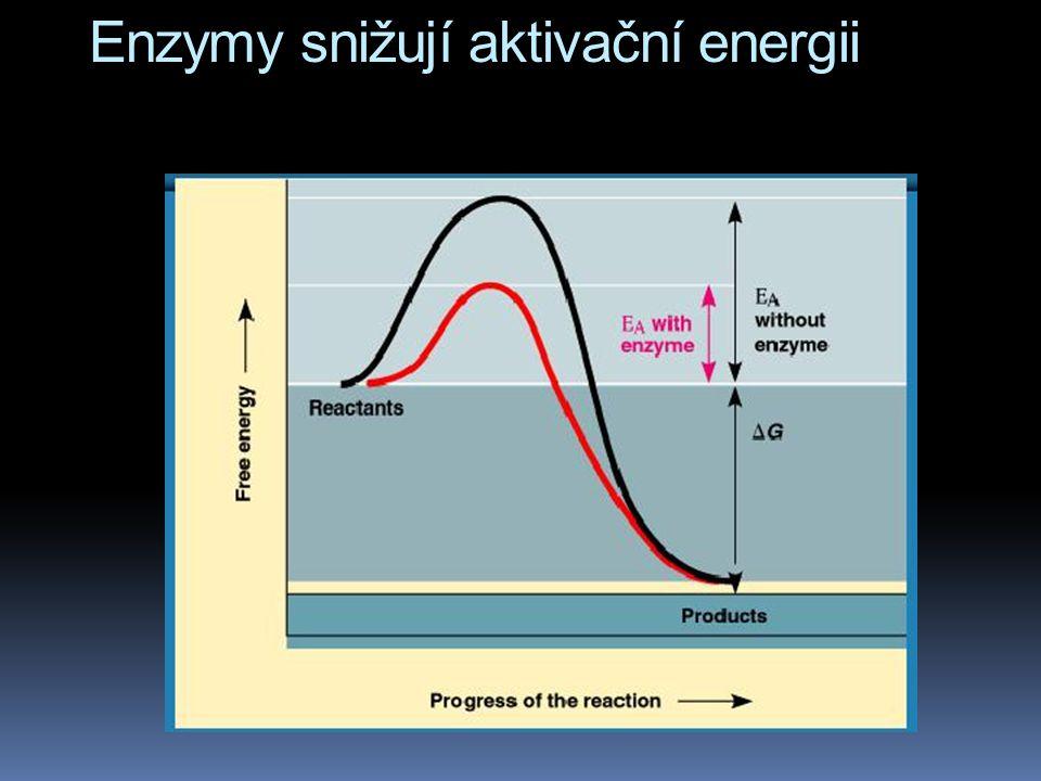 Enzymy snižují aktivační energii