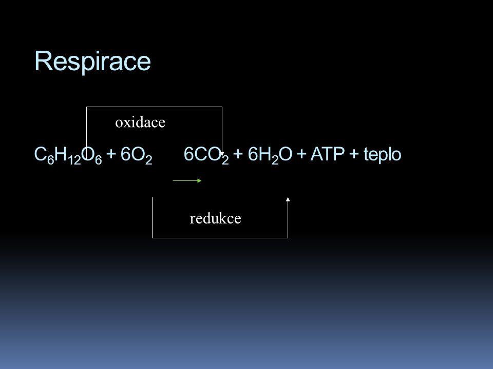 Respirace C6H12O6 + 6O2 6CO2 + 6H2O + ATP + teplo