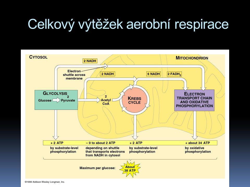 Celkový výtěžek aerobní respirace